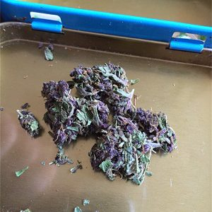 Buy Purple Haze Online, Sativa strain for sale