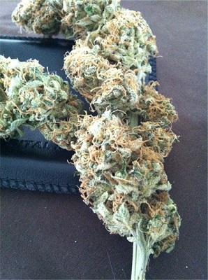 Vanilla Kush For Sale Online